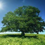 Allied je  Zelena (Ekoloska) Kompanija